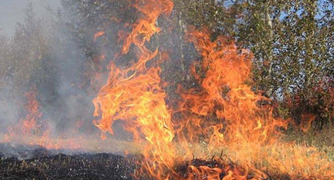 ATENȚIE! Amenzi usturătoare vor fi aplicate celor care dau foc la frunze și gunoaie