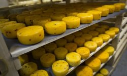 Russia swoops on gang importing £19m of banned cheese from abroad