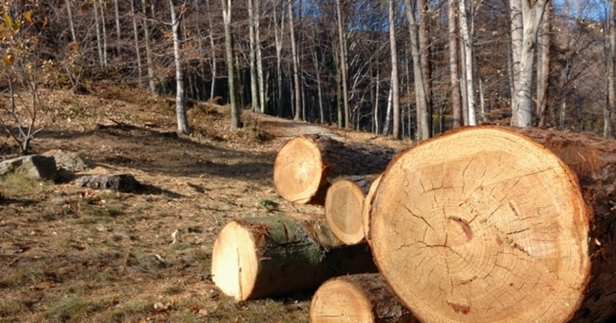 edin a de intalnire a lemnului