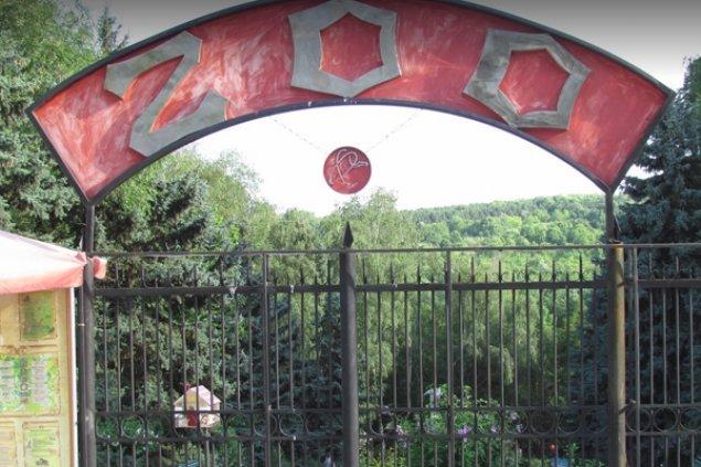 A fost măcel la grădina zoologică din Timișoara. Trei câini au ucis toți cangurii de la Zoo | dermacos.ro
