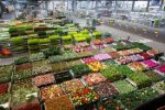olanda-a-exportat-produse-agricole-
