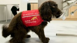 COVID-19: Dogs to be trained to detect virus