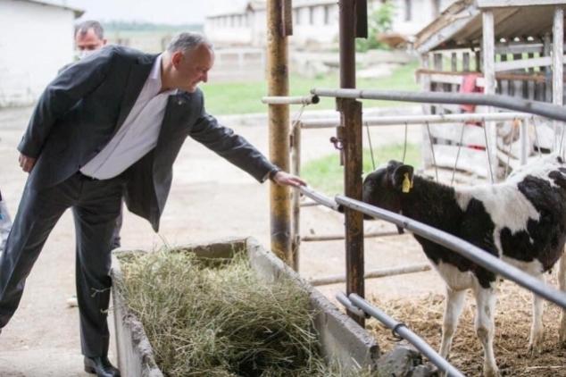 Anatol Șalaru: Politica externă echilibrată și vițelul la poarta nouă