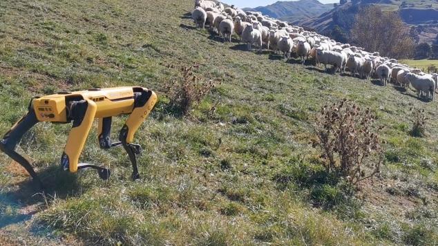 VIDEO / Câine-robot paznic la OI. Cățelul din metal poate fi folosit de agricultori să monitorizeze recoltele