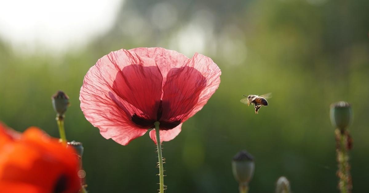 albinele fac bani pe internet
